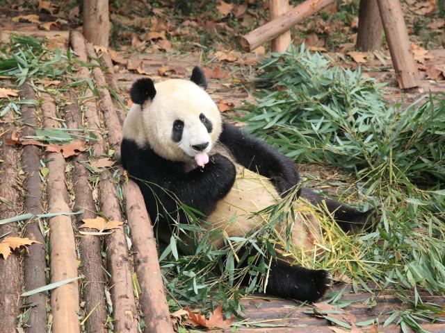 Aziëreis, Chengdu, China - Otterwise